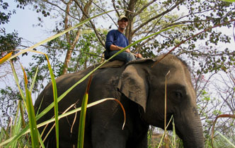 Human-elephant conflict to feature in conference
